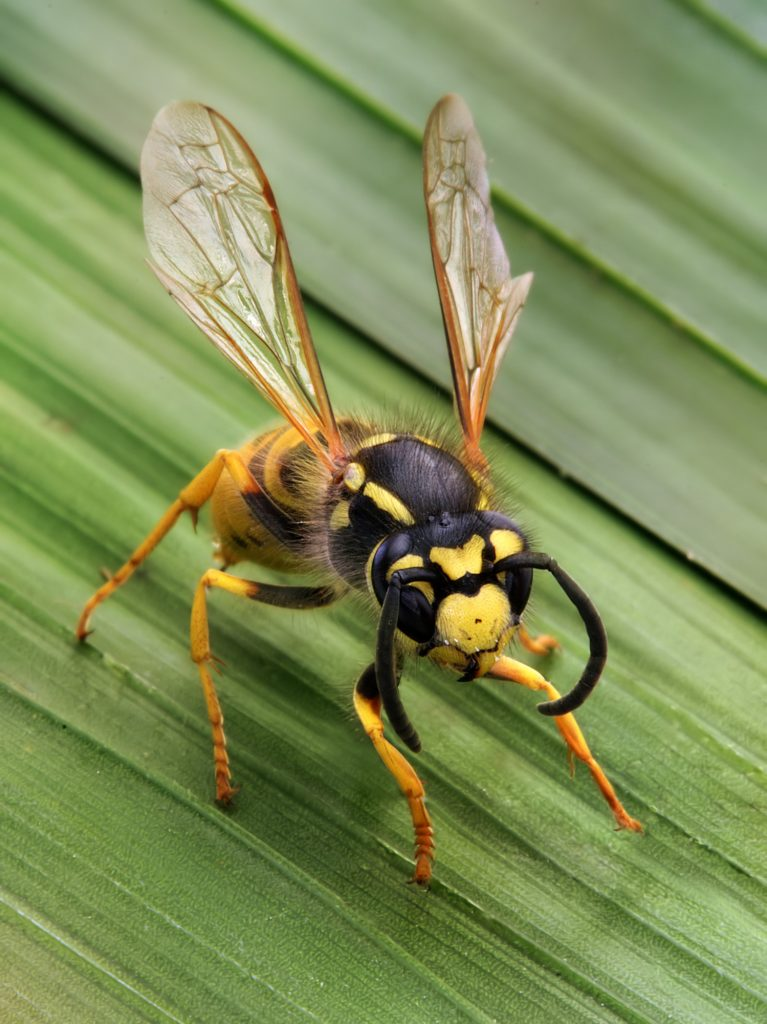 Stinging Insects